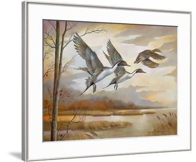 Pintails-Ruane Manning-Framed Art Print
