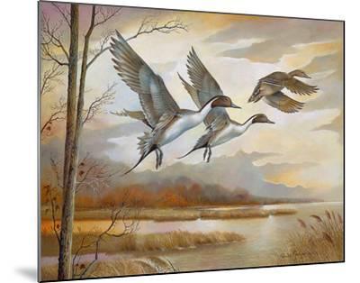 Pintails-Ruane Manning-Mounted Art Print