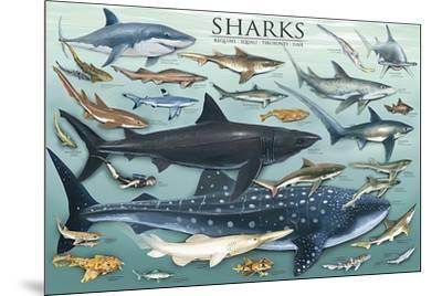 Sharks-Unknown-Mounted Art Print