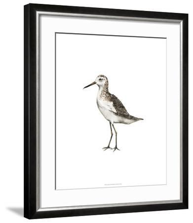 Sea Bird VI-Grace Popp-Framed Premium Giclee Print