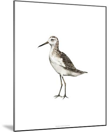 Sea Bird VI-Grace Popp-Mounted Premium Giclee Print
