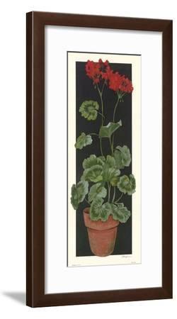Geranium II-Judy Phipps-Framed Art Print