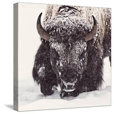 Fortitude-Wink Gaines-Stretched Canvas Print