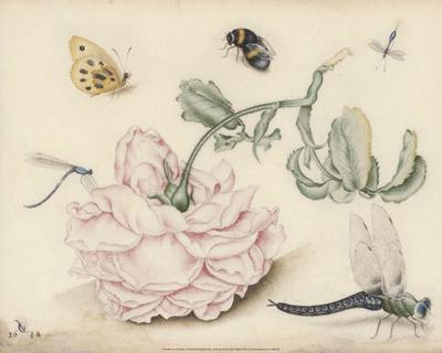 A Rose and Five Insects (1618)-Christoffel van den Berghe-Framed Art Print