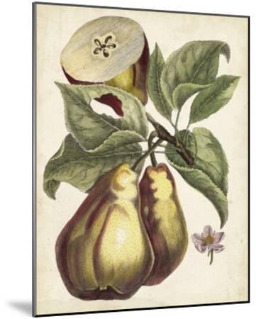 Antique Pear Study I-Unknown-Mounted Giclee Print