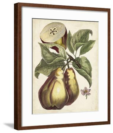 Antique Pear Study I-Unknown-Framed Giclee Print