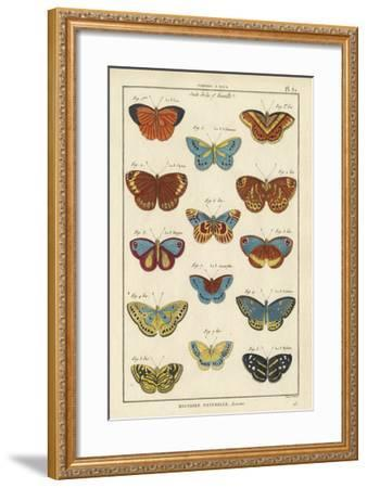 Histoire Naturelle Butterflies I-Unknown-Framed Giclee Print
