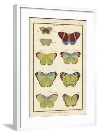 Histoire Naturelle Butterflies II-Unknown-Framed Giclee Print