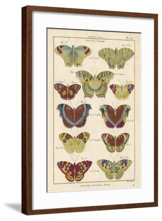 Histoire Naturelle Butterflies V-Unknown-Framed Giclee Print