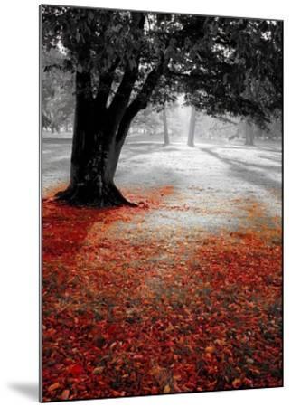 Autumn Contrast-PhotoINC Studio-Mounted Art Print