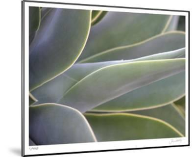 Agave IV-Joy Doherty-Mounted Limited Edition