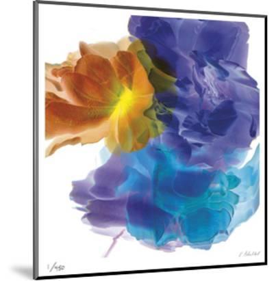 Botanical 7-Kate Blacklock-Mounted Limited Edition