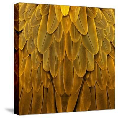 Feathered Friend - Golden-Julia Bosco-Stretched Canvas Print