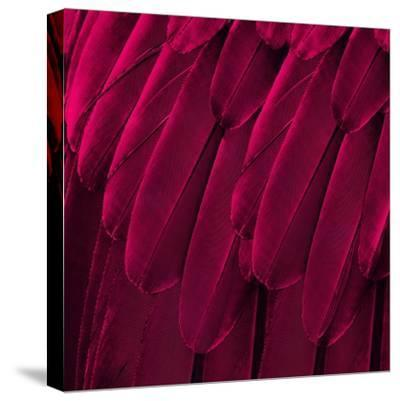 Feathered Friend - Magenta-Julia Bosco-Stretched Canvas Print