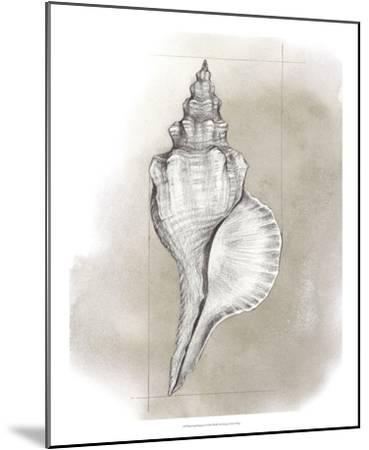 Shell Diagram I-Grace Popp-Mounted Art Print
