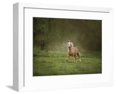 Horse in the Field II-Ozana Sturgeon-Framed Art Print