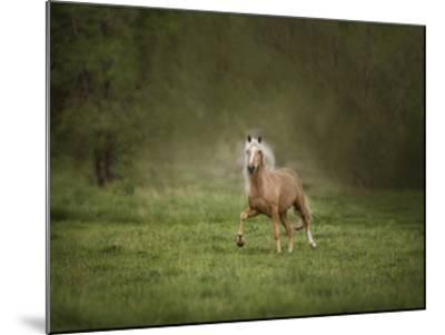 Horse in the Field II-Ozana Sturgeon-Mounted Art Print