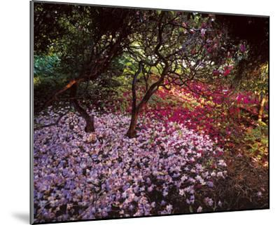 Falling Flowers-Bent Rej-Mounted Giclee Print