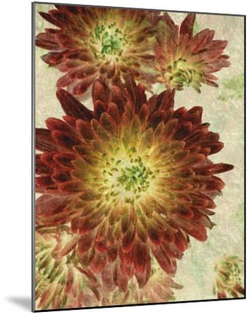 Champagne Floral III-Collezione Botanica-Mounted Giclee Print