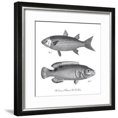 Sea and River Fish I-The Chelsea Collection-Framed Giclee Print