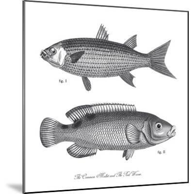 Sea and River Fish I-The Chelsea Collection-Mounted Giclee Print