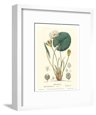 Water Lily (Ninfea Bianca) - Hand Colored Plate-PIerre Jean Francis Turpin-Framed Art Print