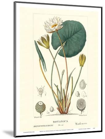 Water Lily (Ninfea Bianca) - Hand Colored Plate-PIerre Jean Francis Turpin-Mounted Art Print