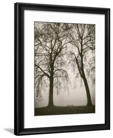 Trees in Fog II-Jody Stuart-Framed Art Print