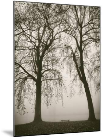 Trees in Fog II-Jody Stuart-Mounted Art Print