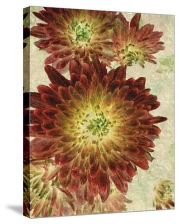 Champagne Floral III-Collezione Botanica-Stretched Canvas Print