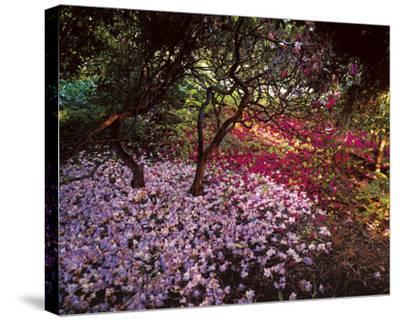 Falling Flowers-Bent Rej-Stretched Canvas Print
