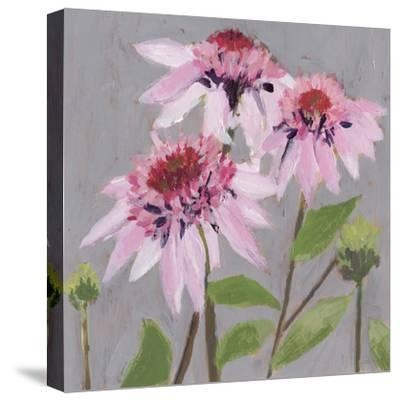 From My Garden - Echinacea-Charlotte Hardy-Stretched Canvas Print