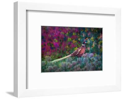Coloured walk with Pheasant-Claire Westwood-Framed Art Print