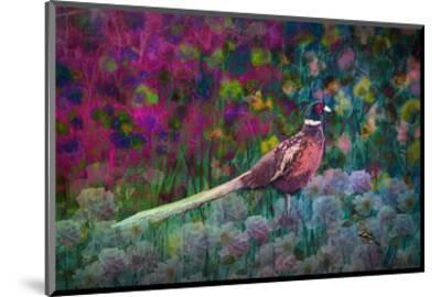 Coloured walk with Pheasant-Claire Westwood-Mounted Art Print