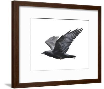 Raven-Todd Telander-Framed Art Print