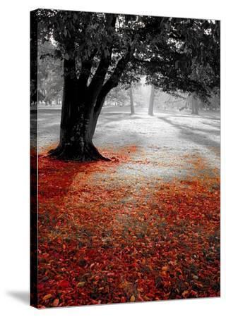 Autumn Contrast-PhotoINC Studio-Stretched Canvas Print