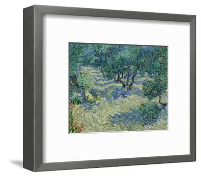 Olive Orchard, 1889-Vincent van Gogh-Framed Art Print