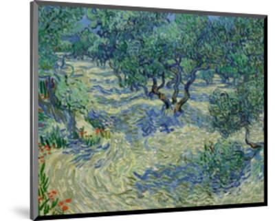 Olive Orchard, 1889-Vincent van Gogh-Mounted Art Print