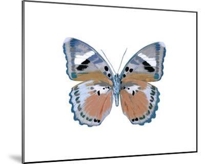 Butterfly in Pink II-Julia Bosco-Mounted Giclee Print