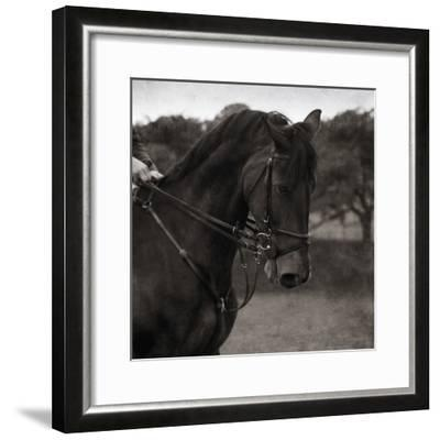 Dressage - The Collection-Pete Kelly-Framed Giclee Print