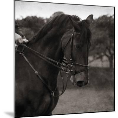 Dressage - The Collection-Pete Kelly-Mounted Giclee Print