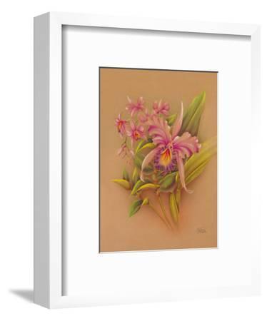 Pink Cattleya Orchid Flower - Hale Pua Studio Hawaii-Frank Oda-Framed Art Print