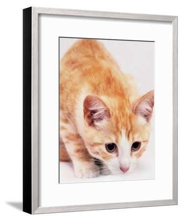 Red Cute Cat Pet Friend-Wonderful Dream-Framed Art Print