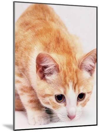 Red Cute Cat Pet Friend-Wonderful Dream-Mounted Art Print