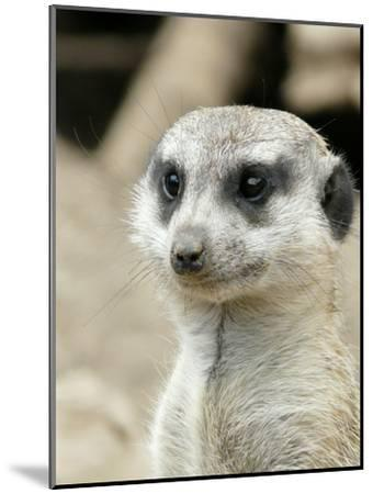 Meerkat Mammal Africa Animal-Wonderful Dream-Mounted Art Print