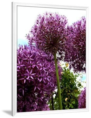 Purple Allium Flower 2-Wonderful Dream-Framed Giclee Print