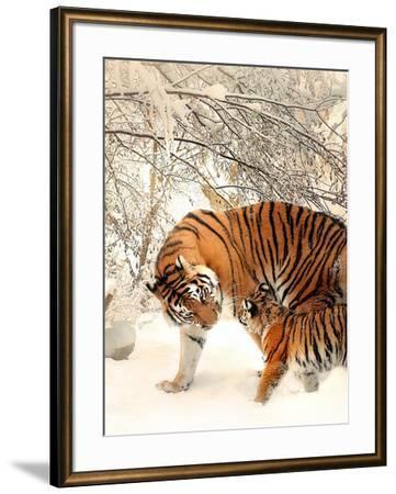 Tiger Family In The Snow-Wonderful Dream-Framed Art Print