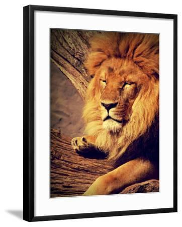 Lion Wildlife Cat Animal Africa-Wonderful Dream-Framed Art Print