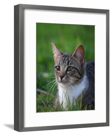 Cat In The Nature Animal-Wonderful Dream-Framed Art Print