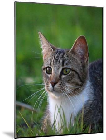 Cat In The Nature Animal-Wonderful Dream-Mounted Art Print